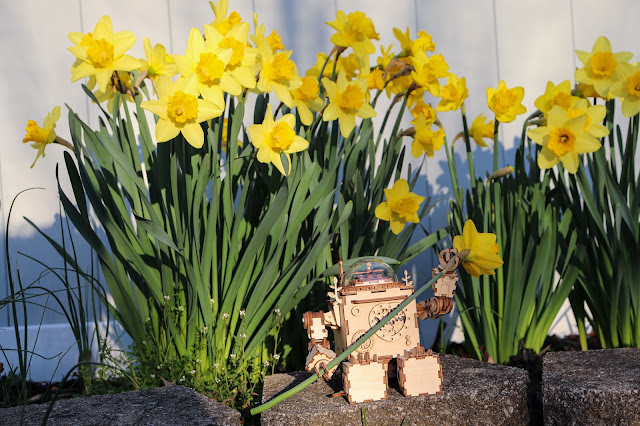 A wooden robot sitting on a stone holding a daffodil with clusters of daffodils behind him.