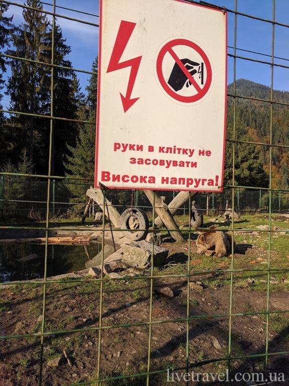 Реабілітаційний центр бурого ведмедя