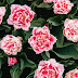 Top 10 Most in Demand Flowers in the USA