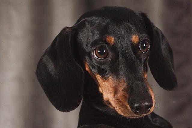 Hond beterschap cadeau | Hond de sigaar?