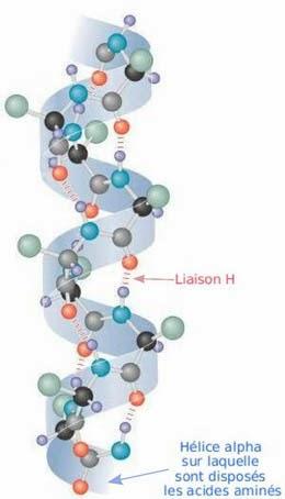 Parte de una proteína