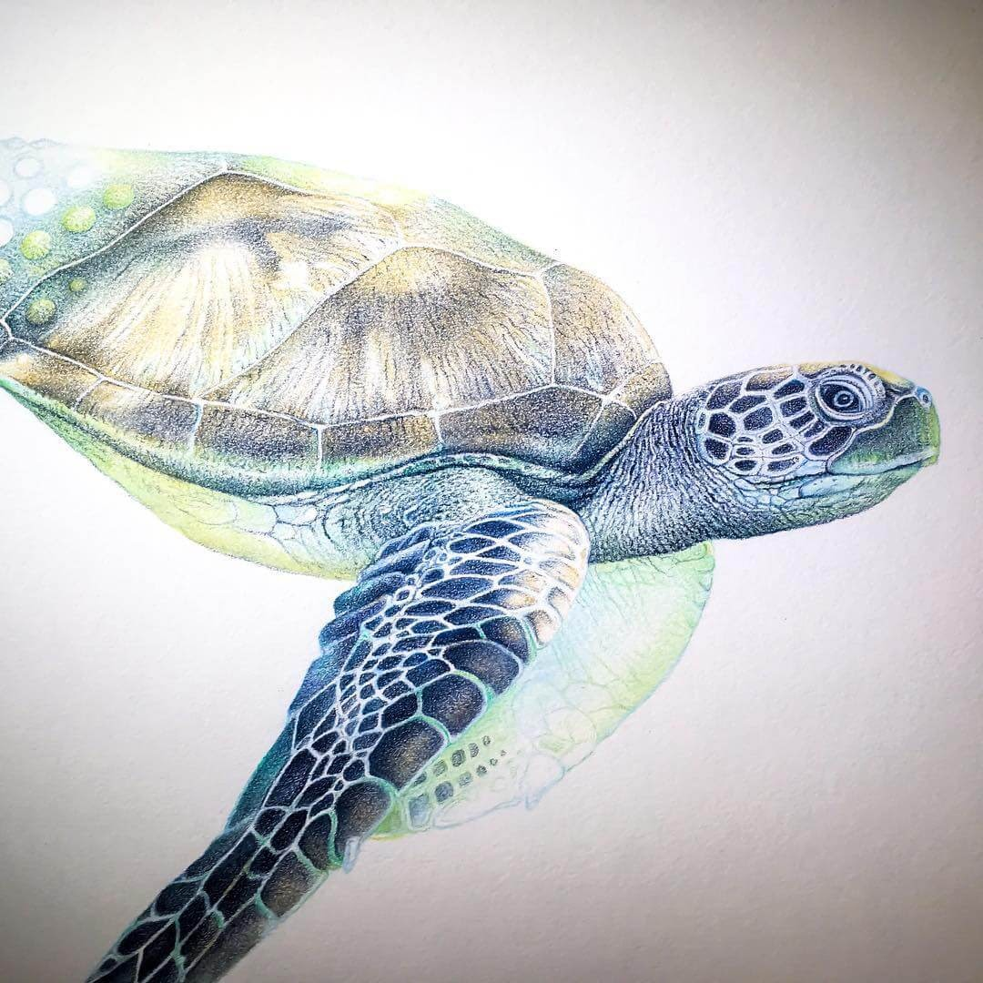 10-Sea-Turtle-mART-Realistic-Wildlife-Animal-Drawings-www-designstack-co