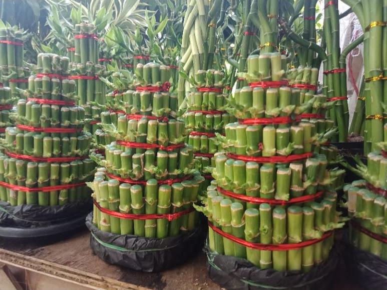 Bambu Hoki 5 susun pagoda susun 5 Jawa Timur