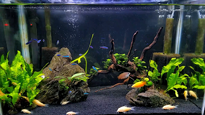 20-gallon beginner planted aquarium