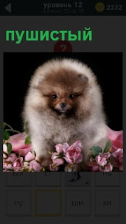 Утопая в цветах сидит пушистая собака и видна одна мордочка с довольным видом