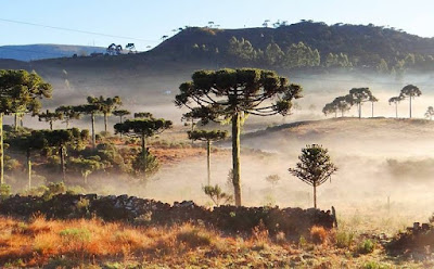 A foto mostra o frio no Sul do Brasil. Frio-la nina-Sul do Brasil.