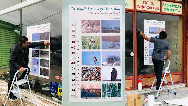 Αργολίδα: Εικόνες από την άγρια ζωή του υδροβιότοπου σε κεντρικά σημεία της Νέας Κίου