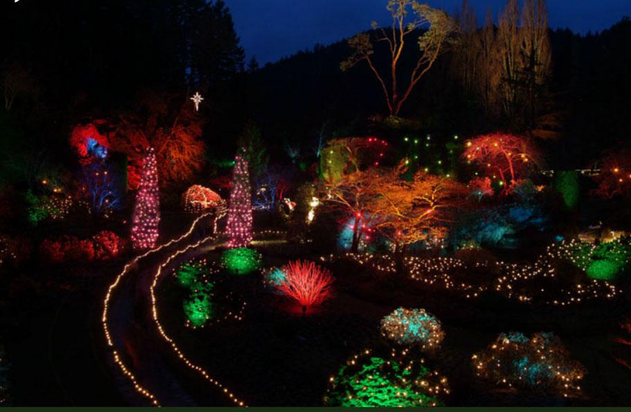 Christmas Lights Cvs