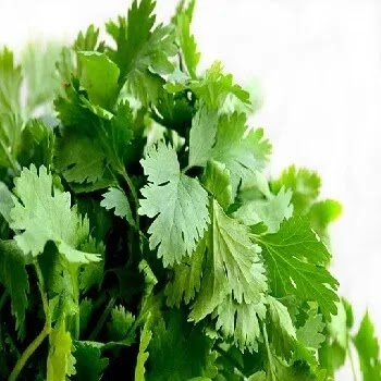 कोथिंबिर, coriander leaves vegetables name in Marathi