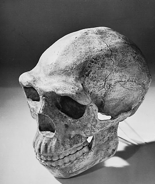 peking man, homo pekinensis, manusia purba cina, manusia purba asia, sinanthrophus pekinensis, homo erectus pekinensis