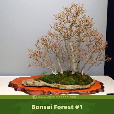 Bonsai Forest #1