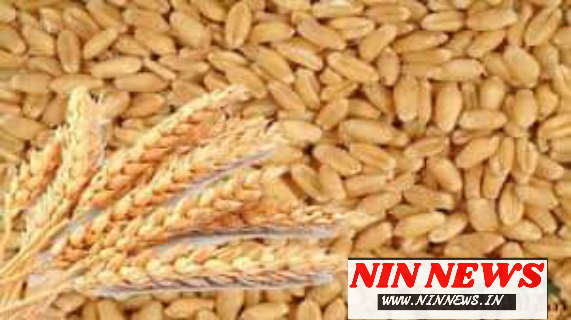 ज़िले की कृषि उपज मंडियों में घोष मूल्य में किसान अपनी गेंहू उपज बेच सकेंगे / Seoni News