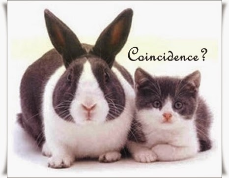 Photo of a rabbit and a cat