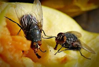 "мухи на пище - тематическое занятие ""Где спит муха"""