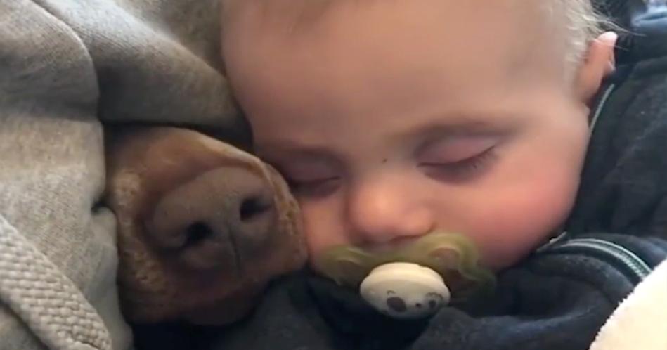 Η Μαμά βιντεοσκοπεί το μωρό της που κοιμάται, Όταν μια μουσούδα ξεπροβάλει ξαφνικά Μέσα Απ'την Κουβέρτα!