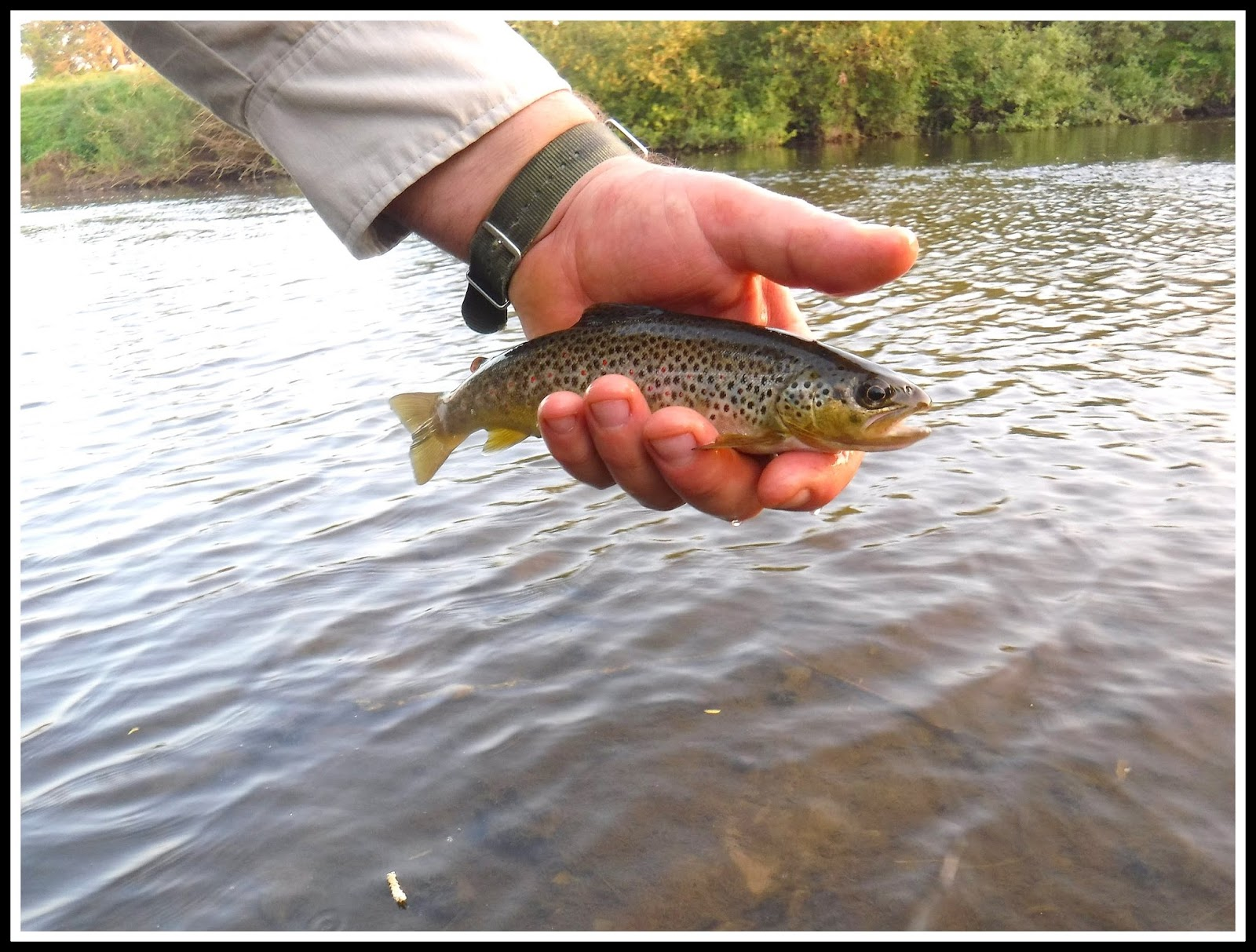 The flee float when the going gets tough get wise for Fish 2 flirt