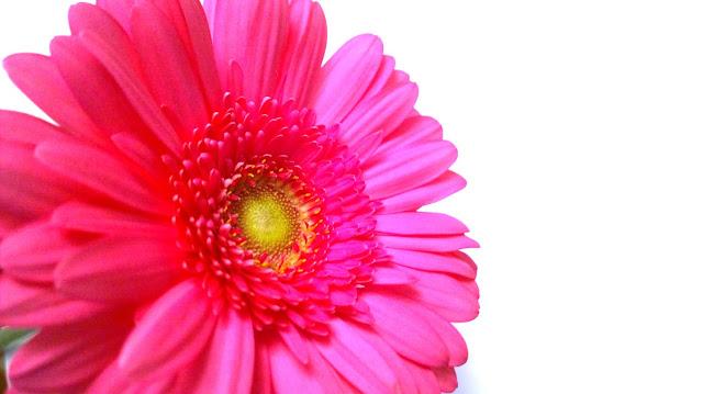 Saippuakuplia olohuoneessa- blogi, kuva Hanna Poikkilehto, gerbera, kukka,