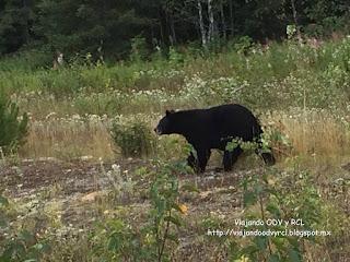 Wells Gray Provincial Park. Canada. Viajando ODV y RCL  http://viajandoodvyrcl.blogspot.mx