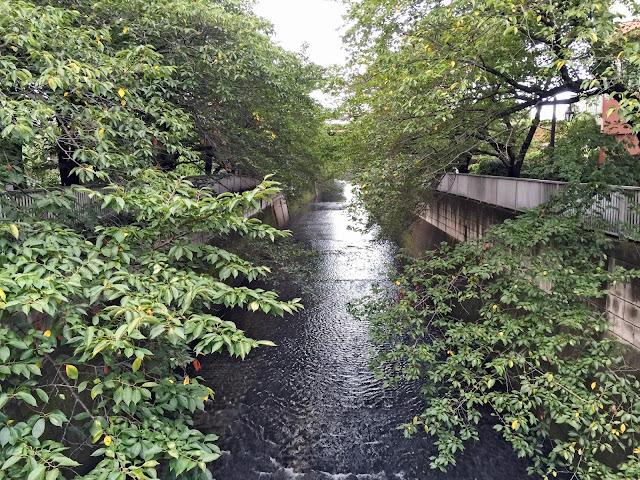 桜,葉,神田川,東中野〈著作権フリー無料画像〉Free Stock Photos