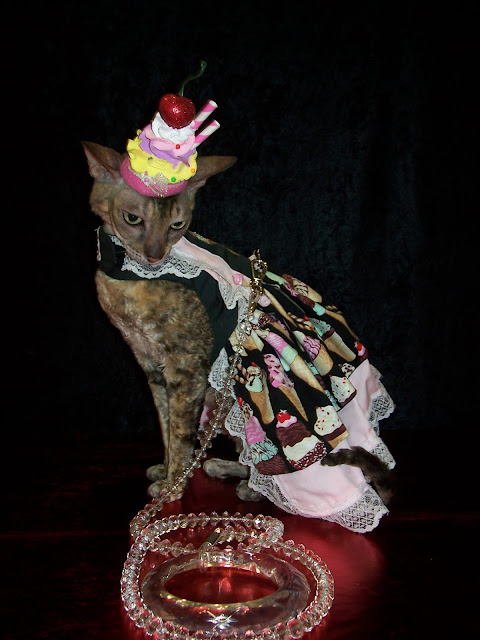 Coco, the Cornish Rex celebrates National Hot Fudge Sundae Day!