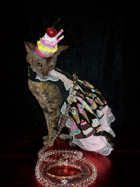 Coco, the Cornish Rex celebrates National Hot Fudge Sundae Day!