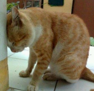 gambar kucing lucu galau - kanalmu
