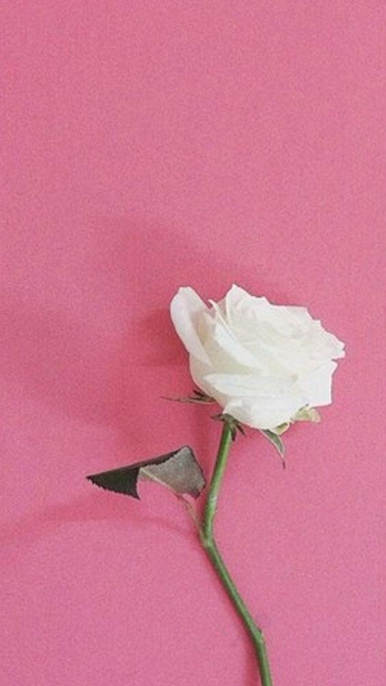 Fondos para whatsapp fondo para whatsapp de rosa blanxa for Fondos de pantalla rosa
