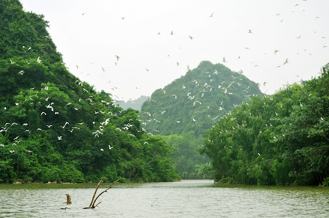 Discover The Green Oasis Near Hanoi 4