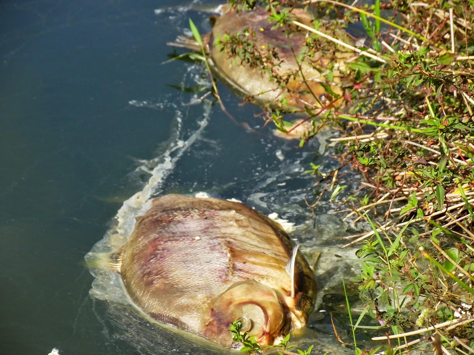 Tubulação de esgoto rompe e causa crime ambiental em Lauro de freitas