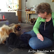three Pekingese in the zoo - part 1