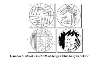 streak platemethode dengan banyak sektor mikrobiologi