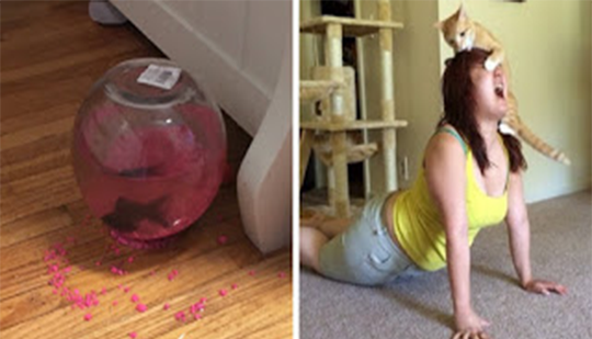 5+ Hilarious Photos That Prove Cats Are The Biggest Assholes