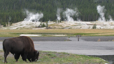 Geyser Hill Yellowstone National Park
