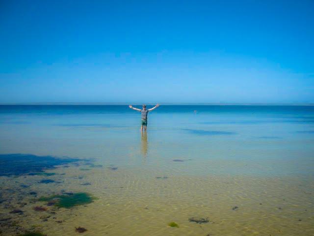 kangaroo island without a car