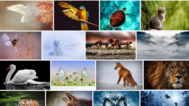 How To Download Copyright Free Images From Google