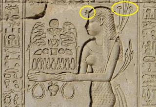 أسرار فطر عيش الغراب عند المصريين القدماء