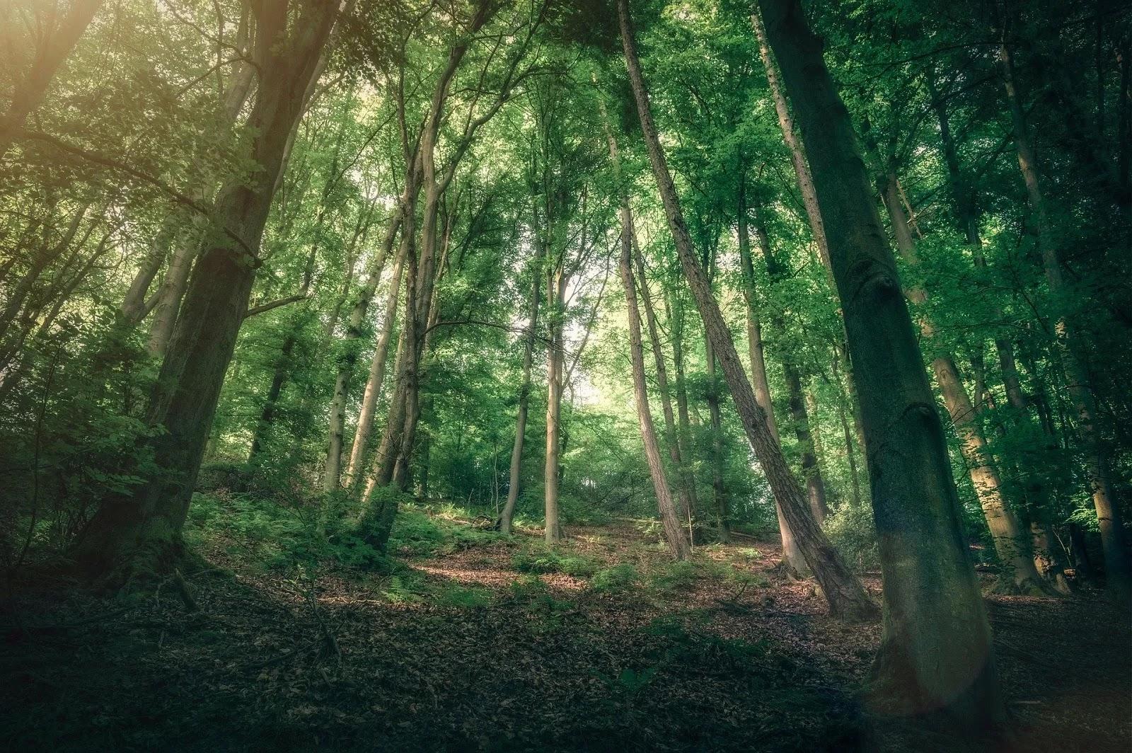 خلفيات مناظر طبيعية لغابات 2020
