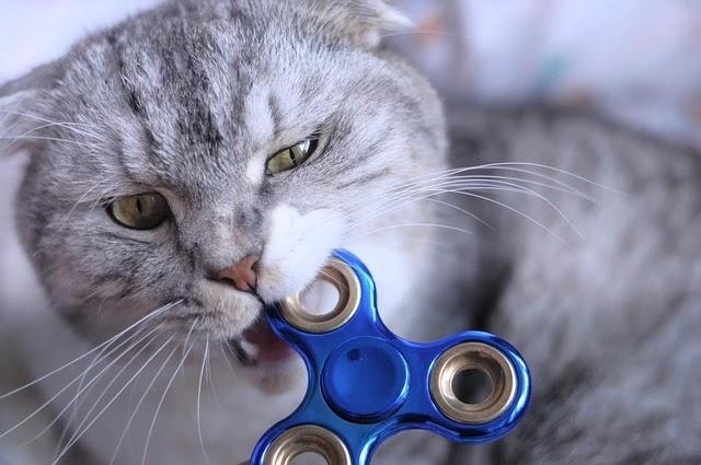اسباب عض القطط لصاحبها بدون سبب