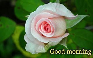 good morning image free download