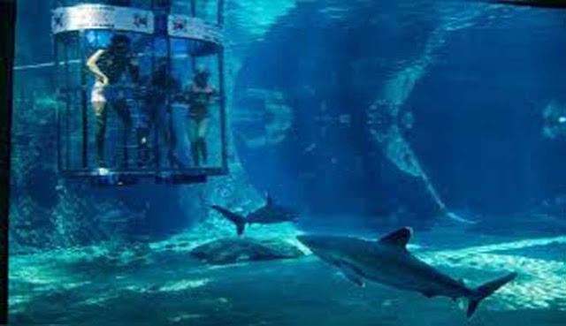 10 Akuarium Terbesar dan Terluas di Dunia