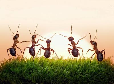 Belajar dari Semut, Hewan Banyak Teladan