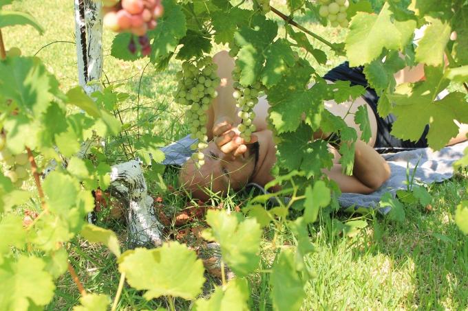 Viinirypälepensaita Nidrissä, Lefkas