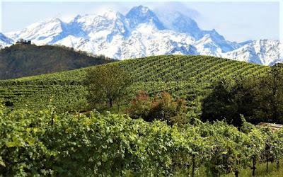 vigne alto piemonte
