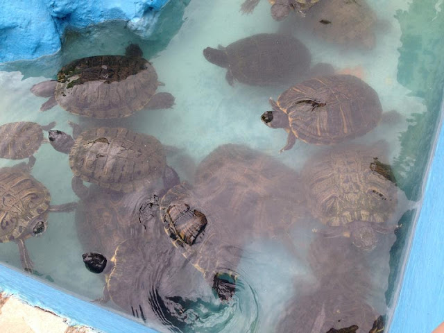 TERRAPINS IN THE HOTEL ZOO