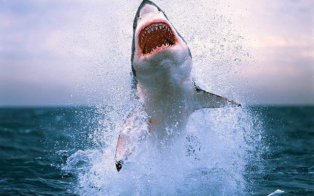 Bureaublad achtergrond met een gevaarlijke haai die uit het water springt