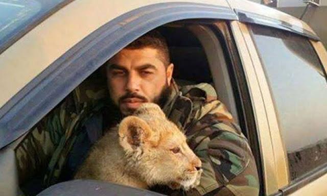 بالفيديو أحد قادة الفصائل الرديفة في ريف حماة يطعم فرساً عربياً أصيلاً حياً لأسدين داخل قفص!!