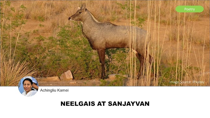 NEELGAIS AT SANJAYVAN BY ACHINGLIU KAMEI