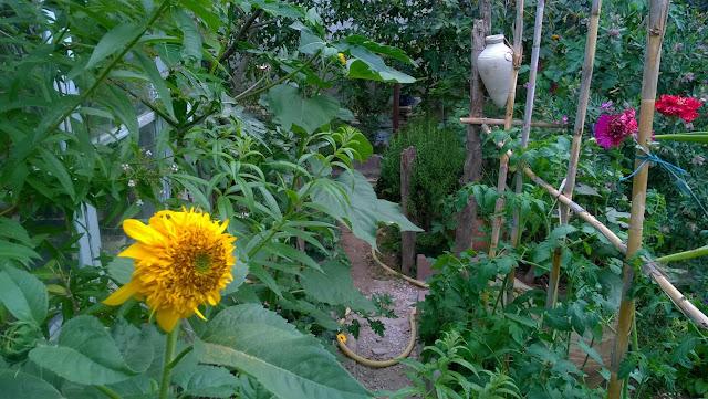 my healthy and beautiful organic garden