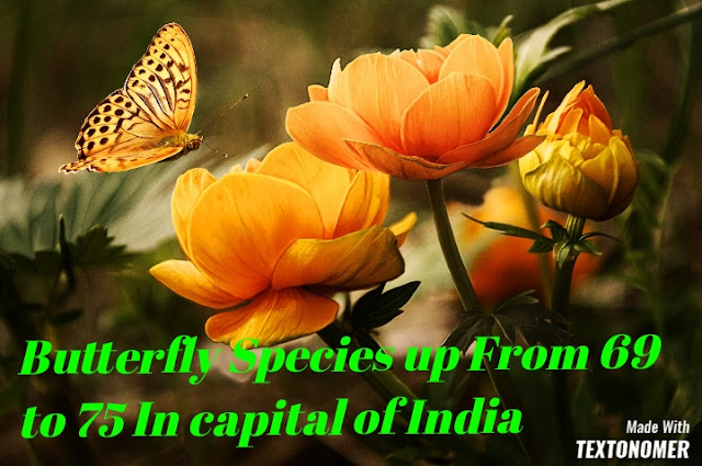 Butterfly Species up From 69 to 75 In the capital of India