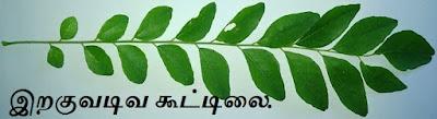 Karuveppilai Leaf